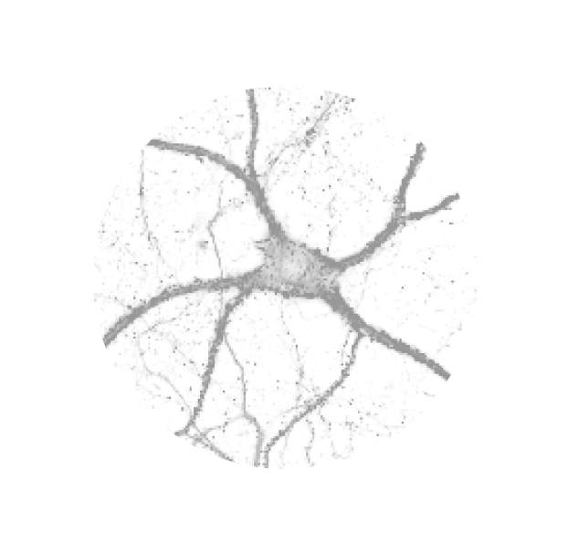 Pearl Meister Greengard Prize logo