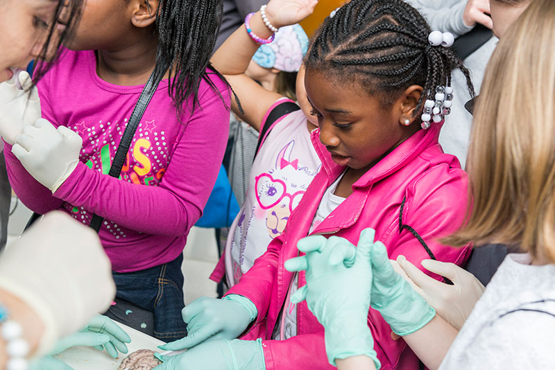 """Children dissect sheep brains at """"The Brainscape,"""" a learning station focused on comparing brains from different species."""