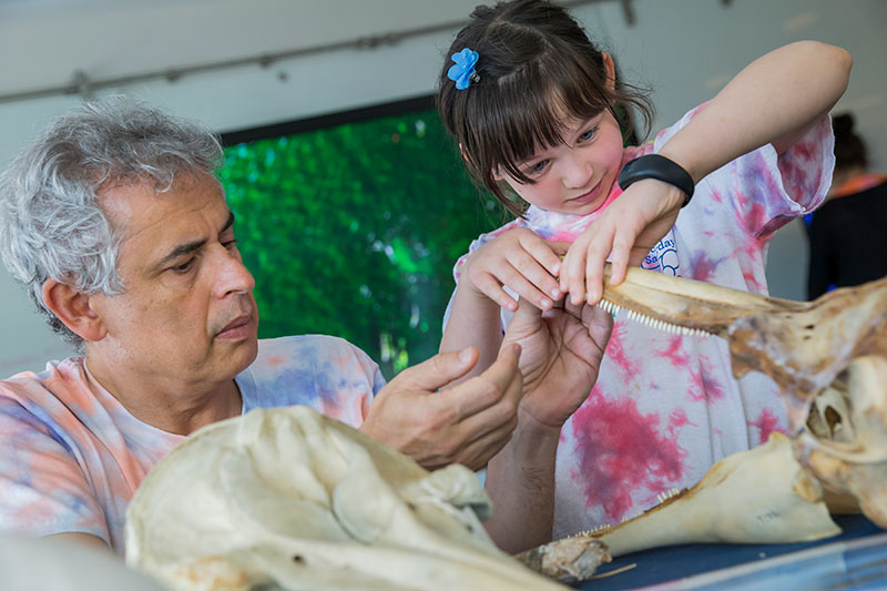 Kids explore dolphin skulls at a learning station led by Marcelo Magnasco. Magnasco's lecture on dolphin communication drew kids in grades K through 4.