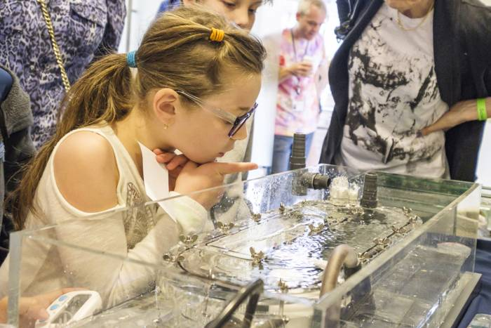 Science Saturday Festival