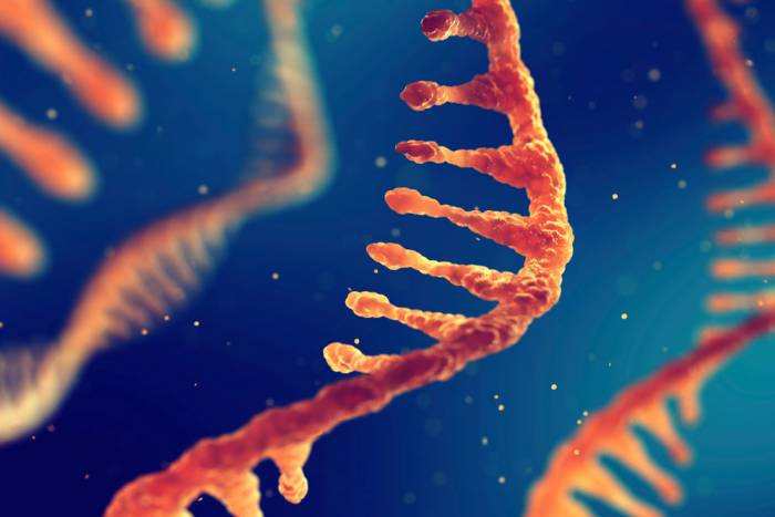 Photo of RNA