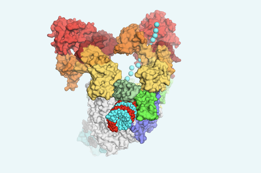 Structural basis for helicase-polymerase coupling in SARS-CoV-2