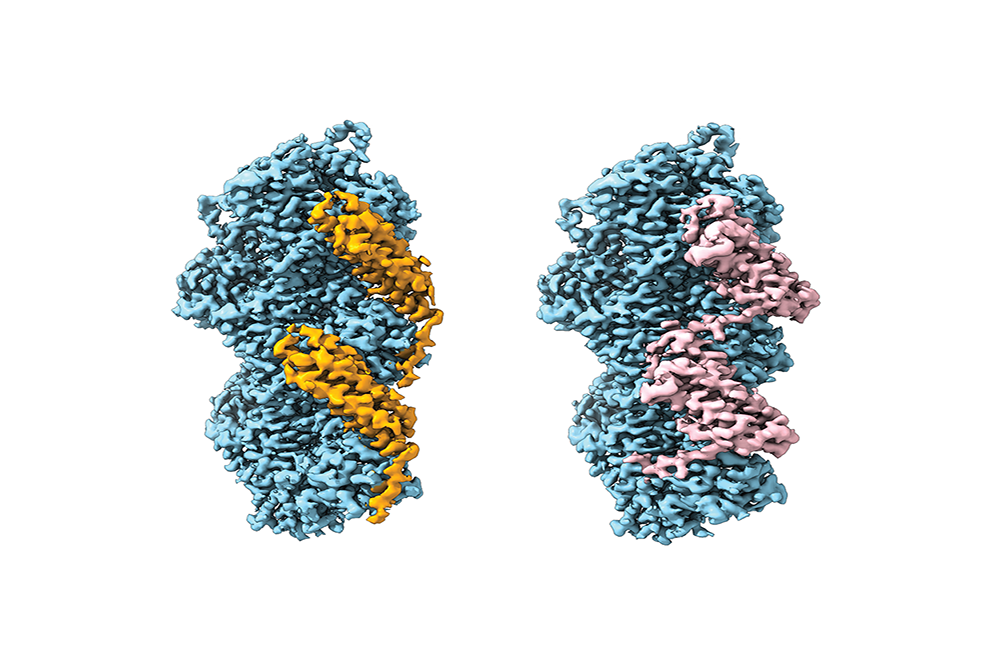 actin binding