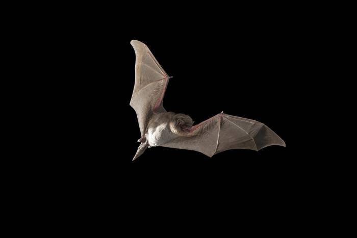 photo of bat