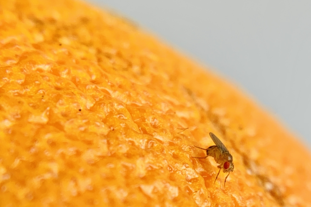 fly orange