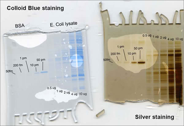 Silver vs. Colloidial