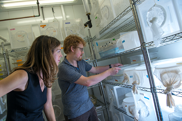 Leslie Vosshall in the mosquito lab