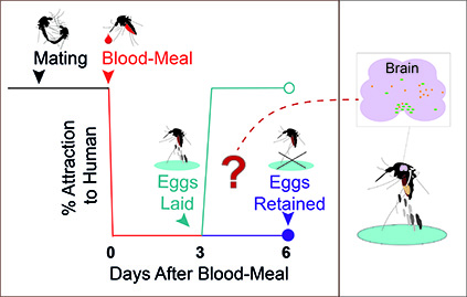 Investigating the role of endocrine signaling in modulating the host-seeking behavior of female Aedes aegypti mosquitoes during different reproductive states