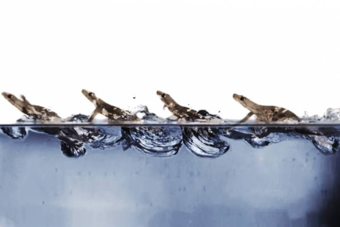 Image of geckos on water