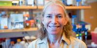 Jennifer C. Darnell, Ph.D.