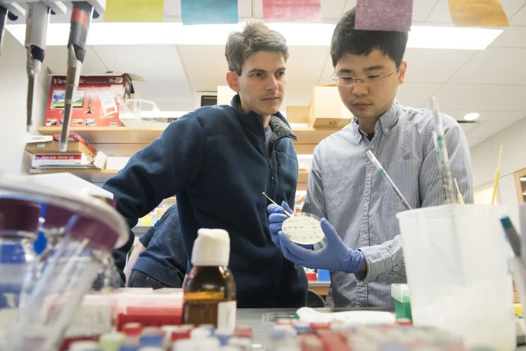 Luciano Marraffini and Wenyan Jiang in the lab