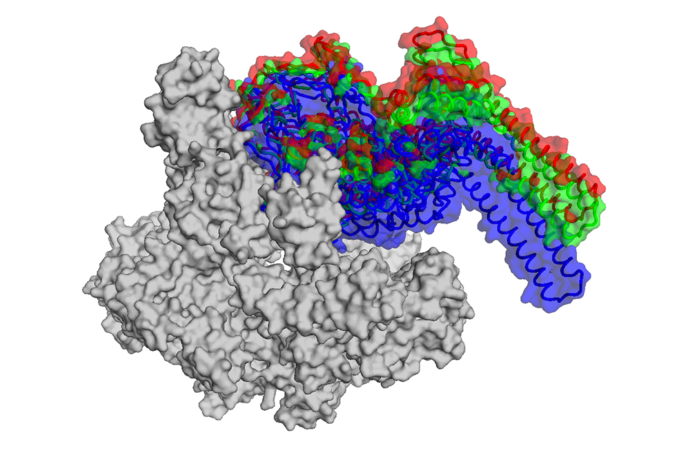 RNA polymerase, an enzyme essential to life
