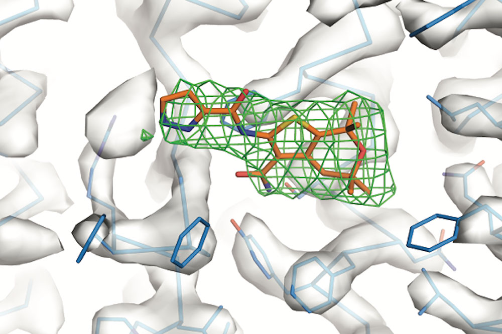 "A potentiator (orange) binds to a protein ""hotspot"""