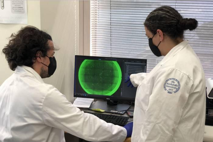 Coronavirus lab testing