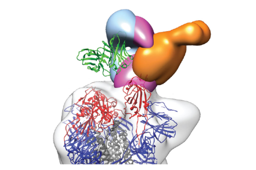 illustration of antibodies